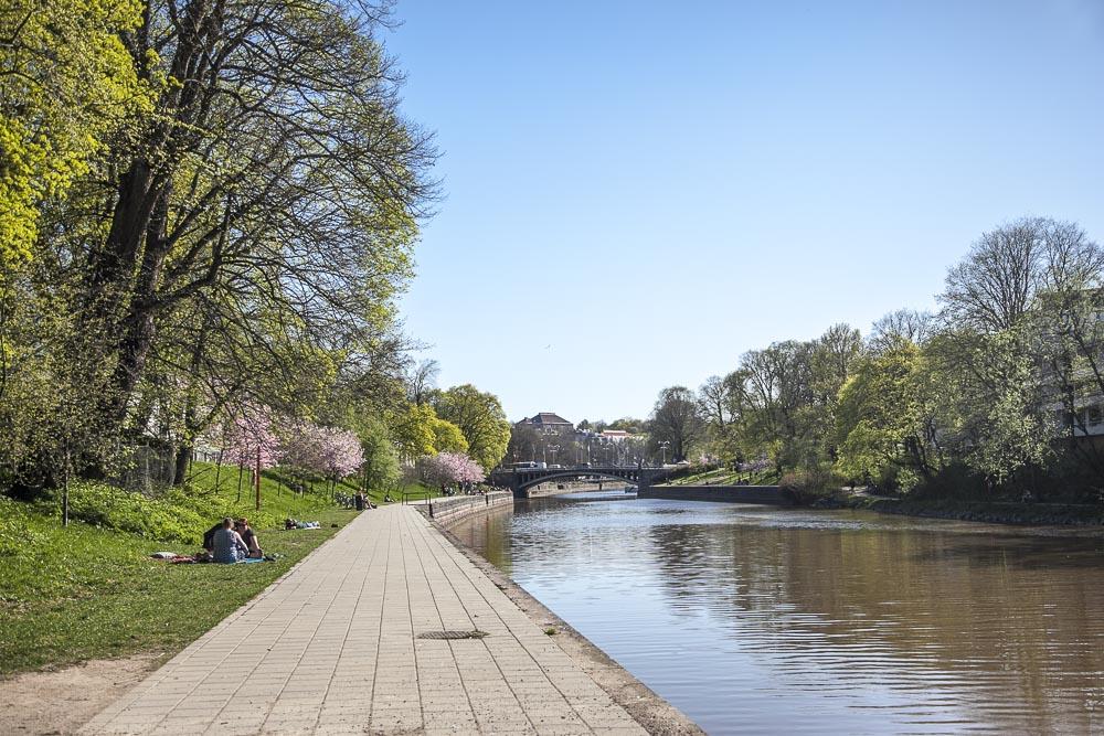 Aurajoki ja kukkivat kirsikkapuut
