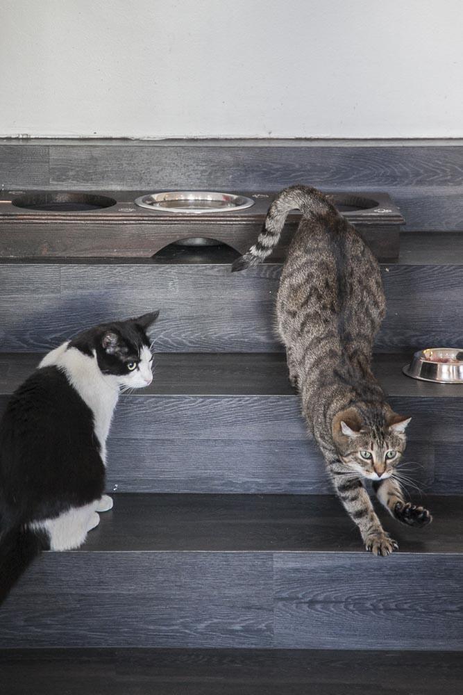 Kissojen ruokahetki kissakahvila Nurrissa