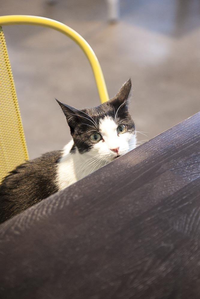 Kissakohvik Nurri ja yksi sen asukas