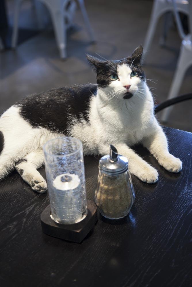 Kissa pöydällä kissakahvilassa