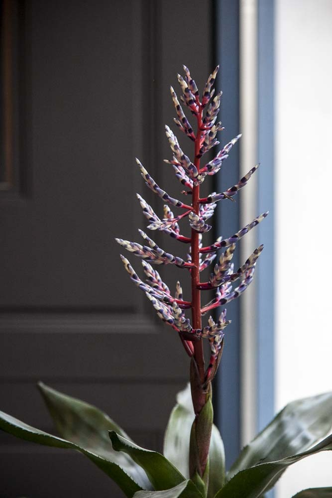 upea kasvi ravintola crun ikkunassa