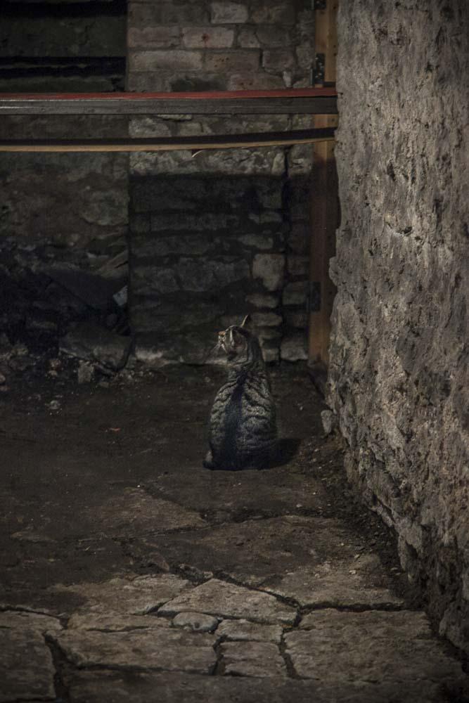 Liukuhihna ja kissa talon kellarissa
