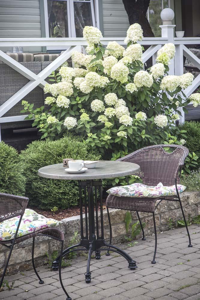 piha ja hortensiat mimosa tallinnassa