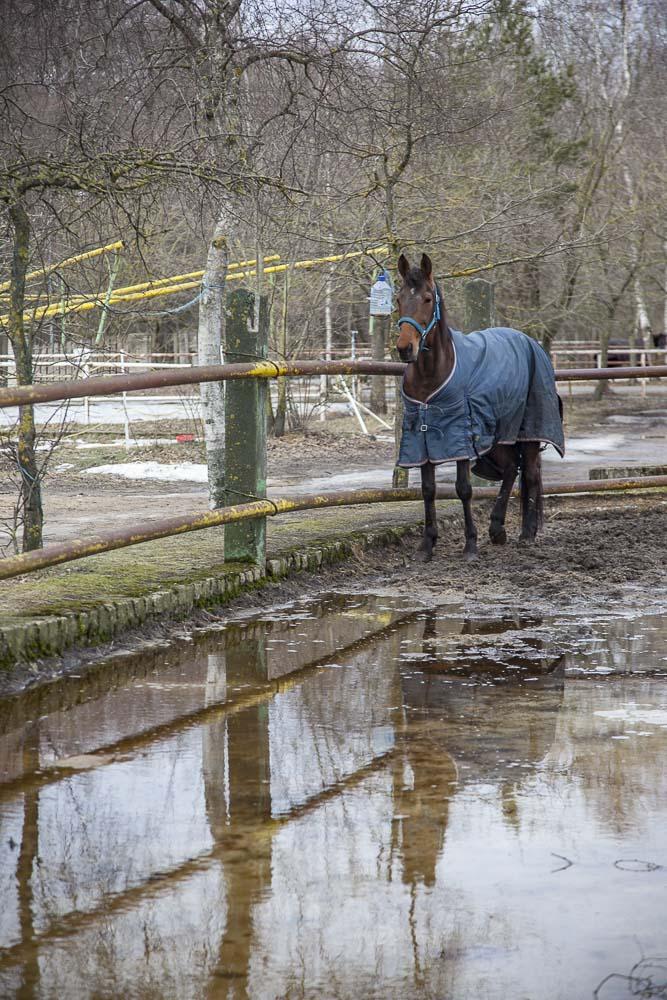 hevosia tallinnassa