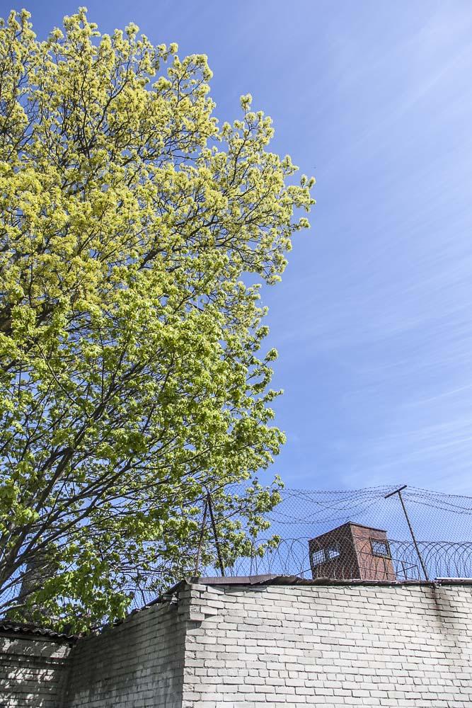 Vihreää kevättä ja vankilan muuria
