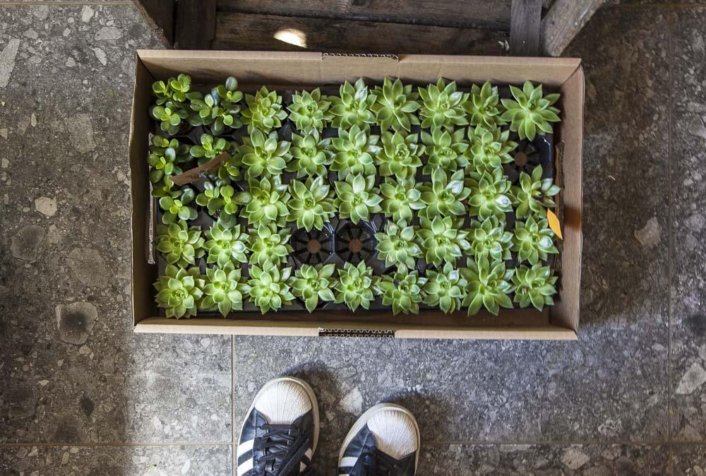 viherkasveja tallinnassa