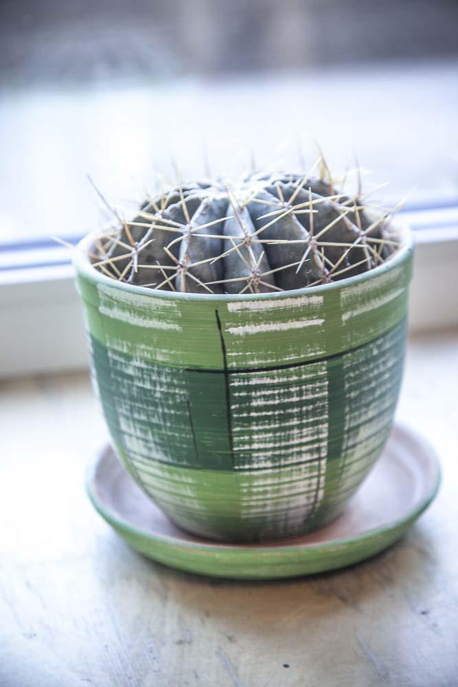 kaktus ikkunalaudalla vegaaniravintola Trussa