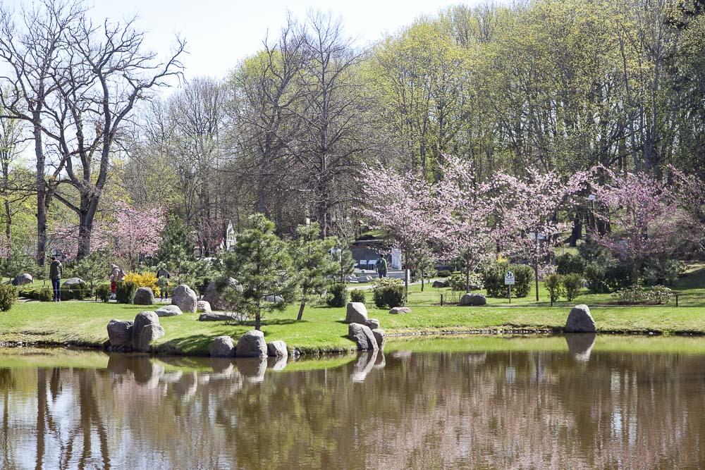 kadriorg ja sen japanilainen puutarha