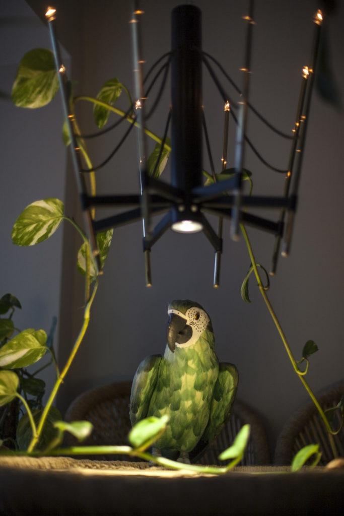 Parrot Minibar ja papukaija