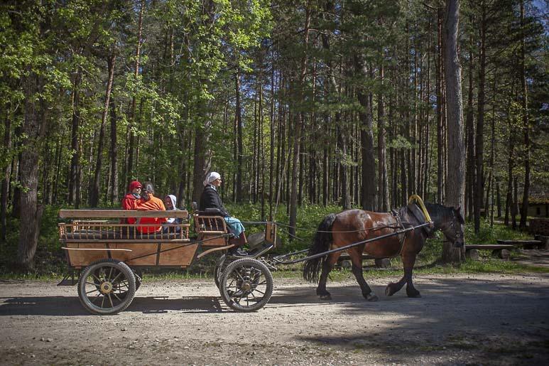 Viron ulkoilmamuseo
