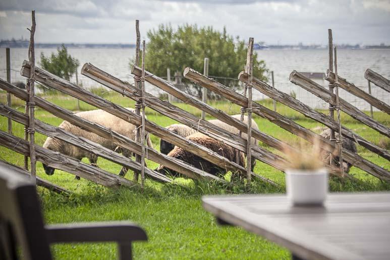 Lampaat Paat-ravintolan viereisellä laitumella