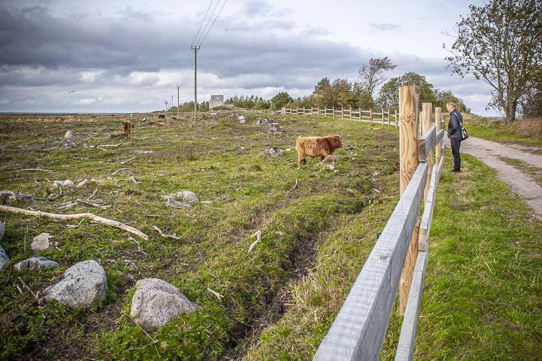 Paljassaare ja kaupungin lehmien laidun